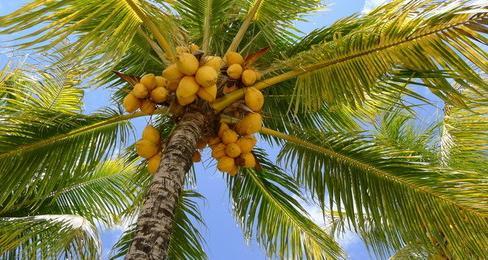Mideast Travel Jamaica